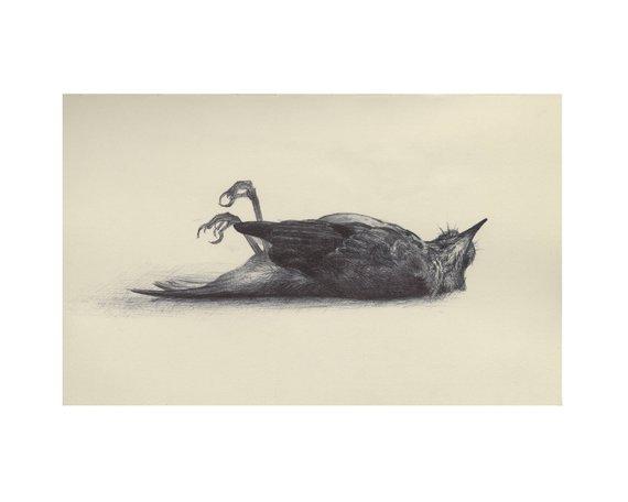shauna finn oiseau mort.jpg